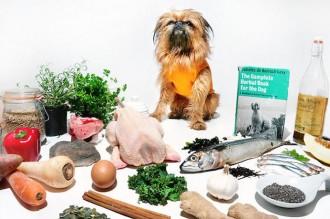curious-canine-kitchen-pop-up-restaurant-1