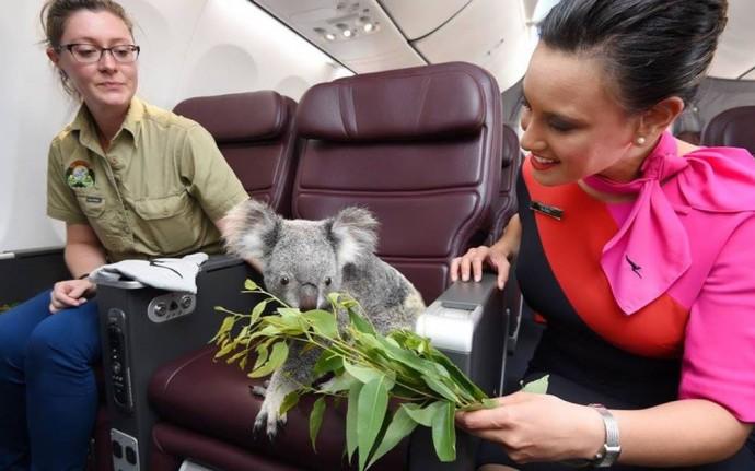 famous-koalas-3
