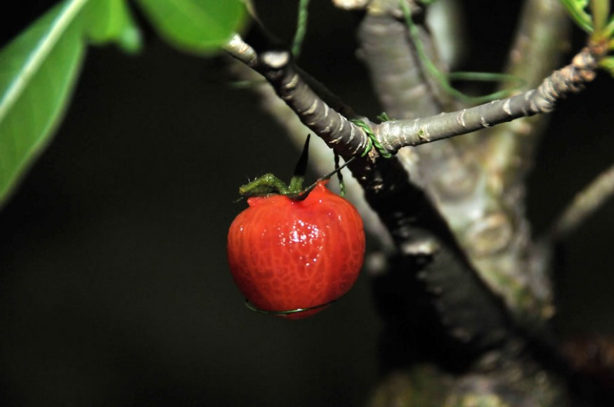 Aziamendi-at-Iniala-Beach-House-Ultimate-Menu-Bonsai Tree