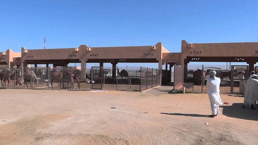 Al-Ain-Camel-Market-9