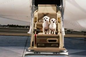 airport-terminal-for-pets-at-JFK