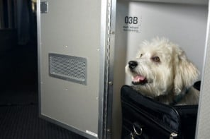 American Airlines first class cabins for pets 1