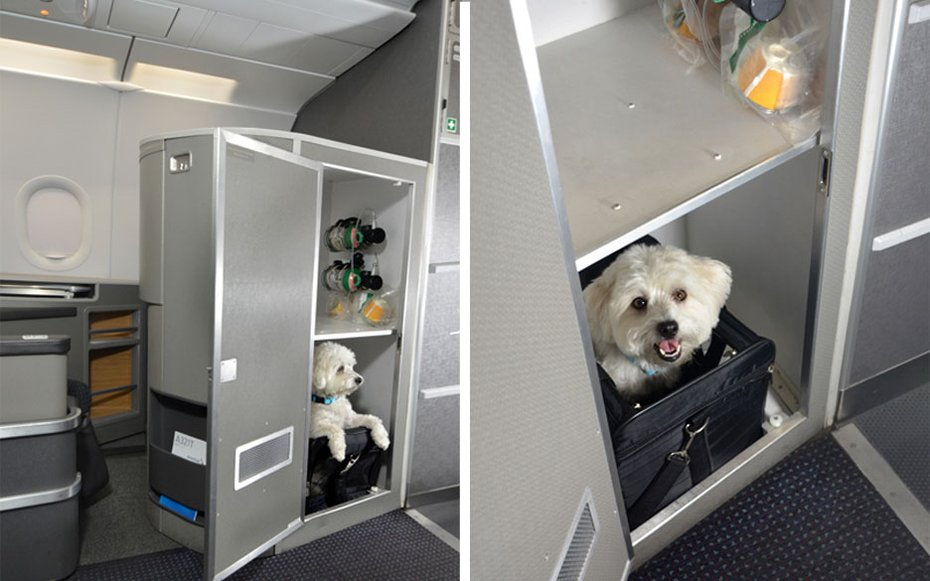 American Airlines first class cabins for pets 2
