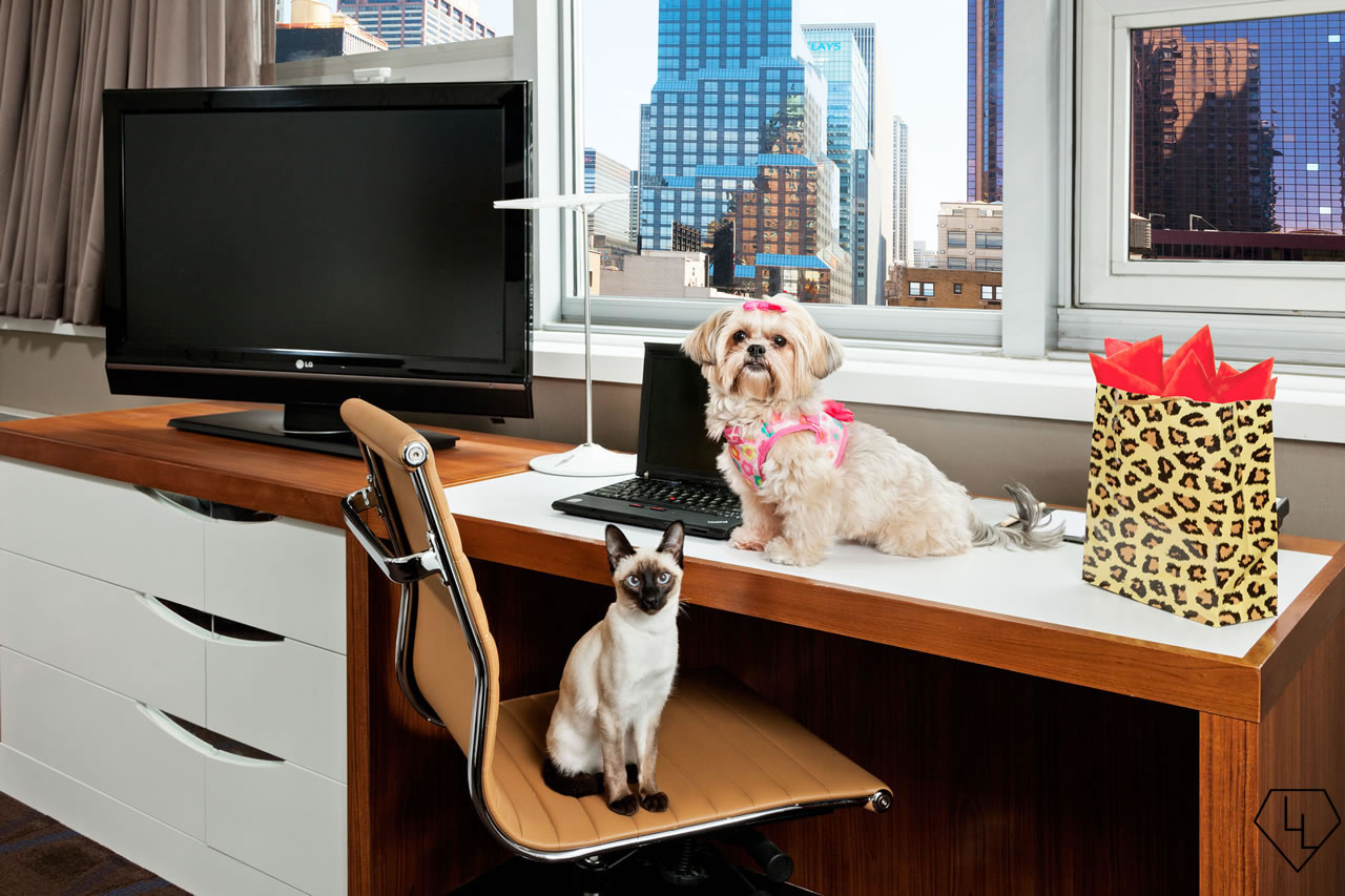 DTM-Pet-Photo-Both-Desk-1