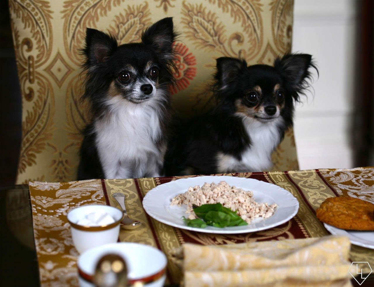 Dog-Menu-Waldorf
