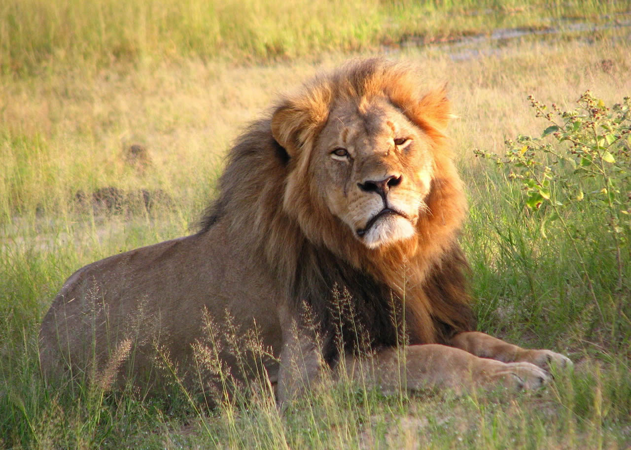 Four US airlines announce ban on hunting trophies 2