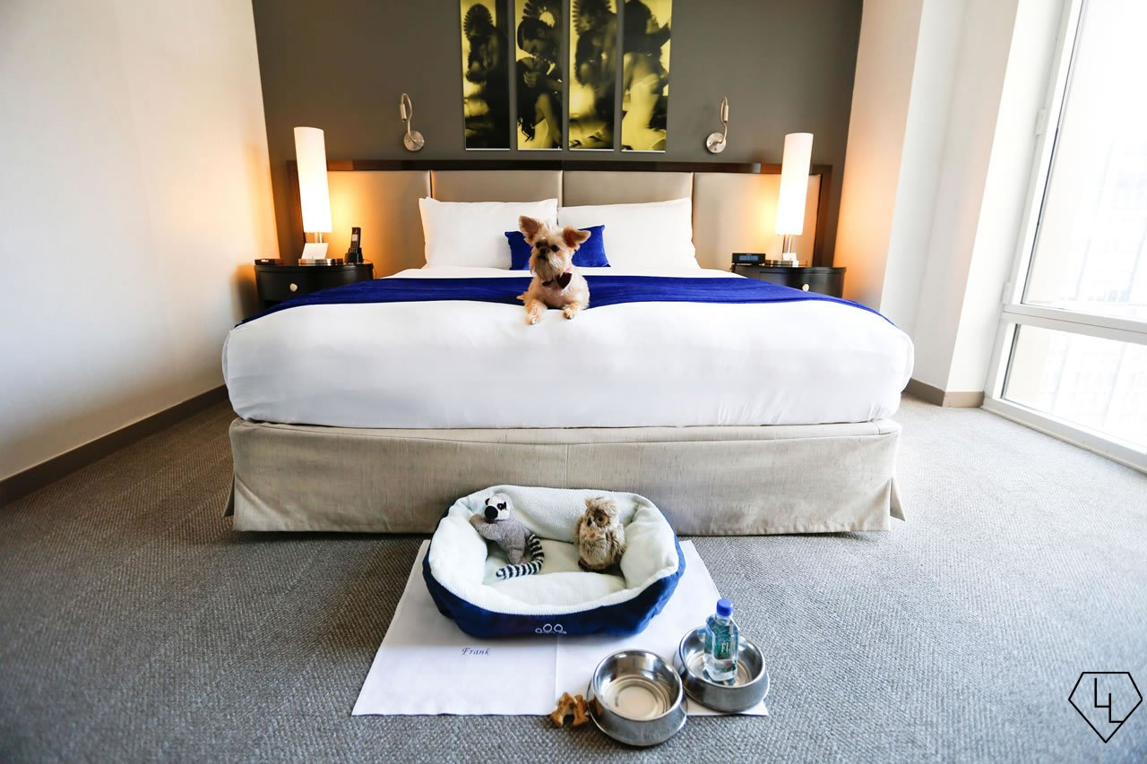 Pooch pampering the top 10 pet friendly luxury hotels in for New york pet friendly hotels