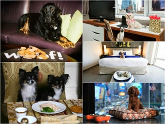 New York top 10 pet-friendly hotels