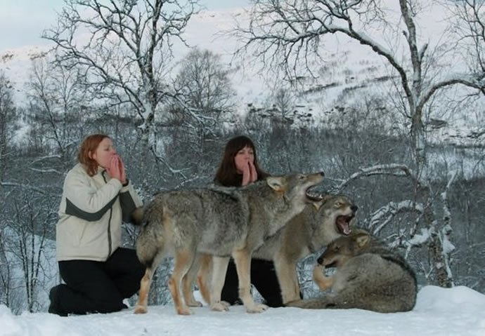 Norway Polar Park welcomes wolf-lovers 2