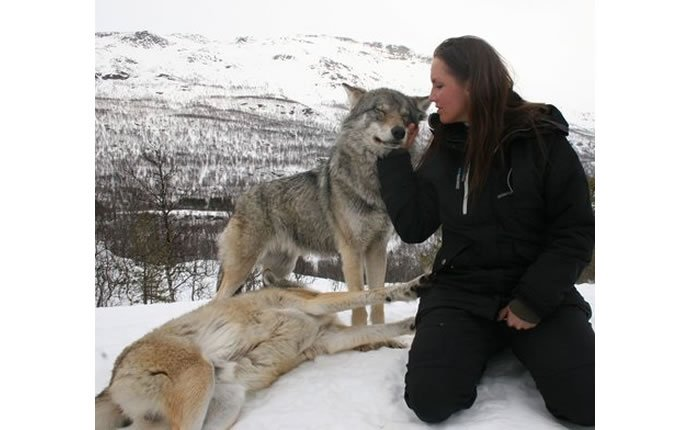 Norway Polar Park welcomes wolf-lovers 4