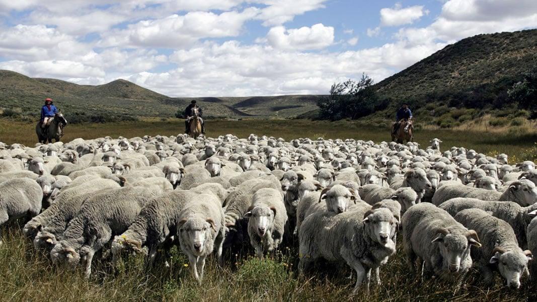 PETA videos rattles Stella McCartney who cut ties with Patagonian wool supplier 2