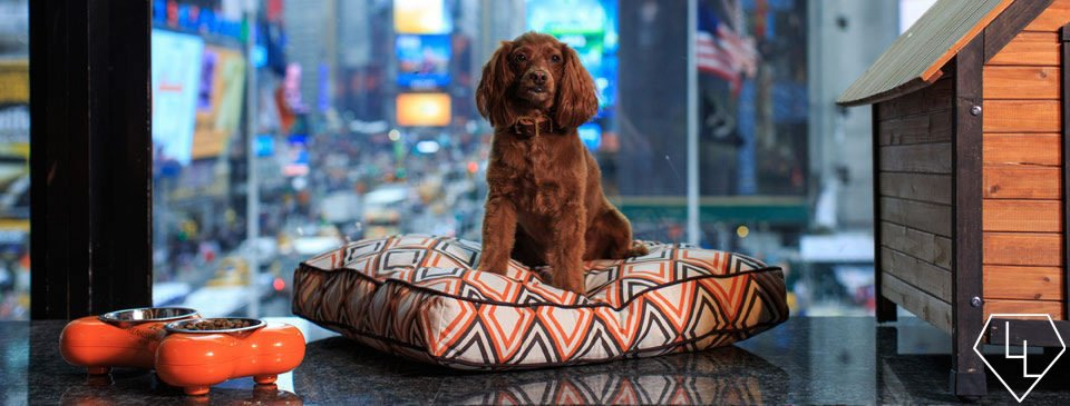 pooch pampering the top 10 pet friendly luxury hotels in