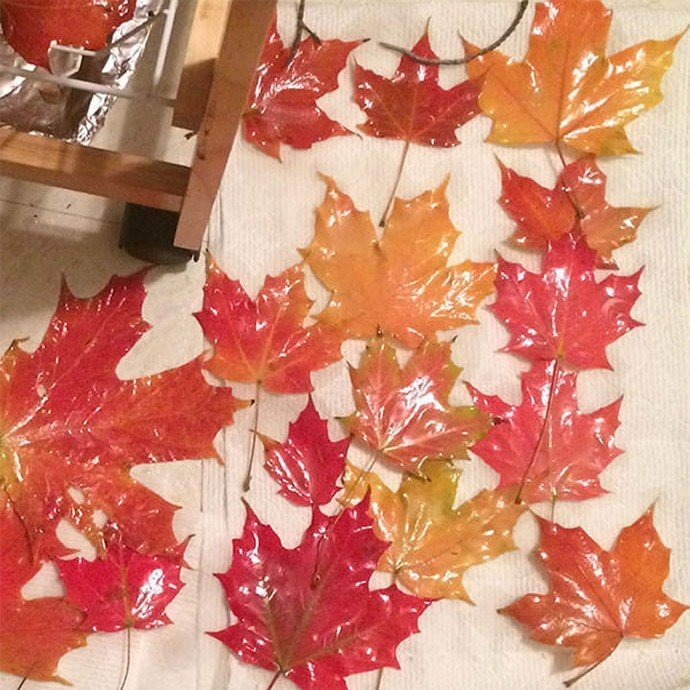 dead-leaves 1