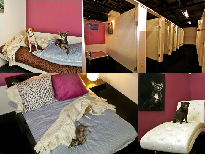 Heres a look inside a new york luxury hotel exclusively for Pet friendly luxury hotels