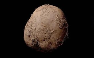 potatophoto