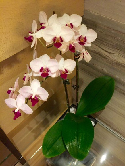 Orchids are used for decoration on spa beds, towels and almost every corner and crook
