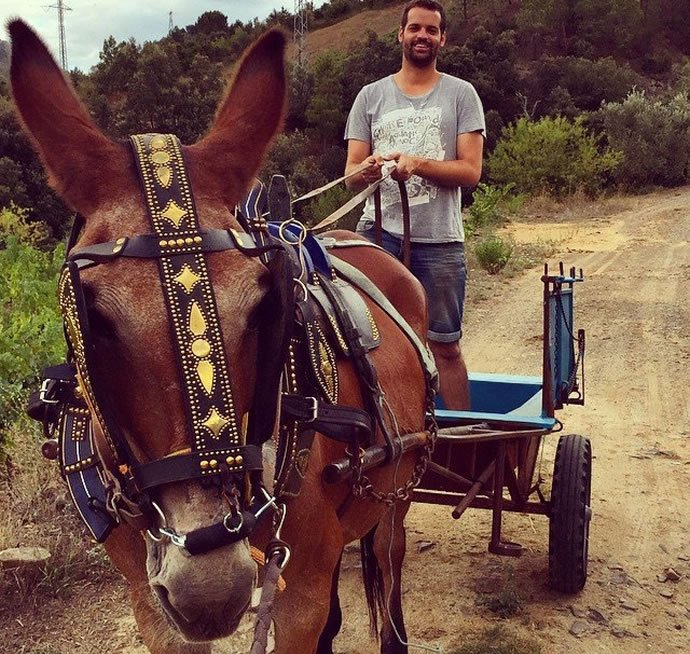 Albert costa miralbell in his vineyard with the most hardworking mule
