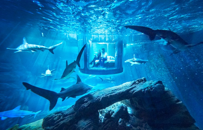 Paris-aquarium-1 (3)