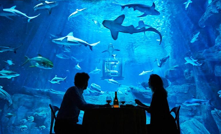 Paris-aquarium-1 (6)