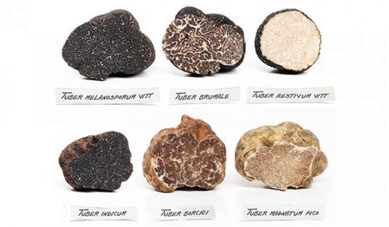 The truffle-rich terroirs