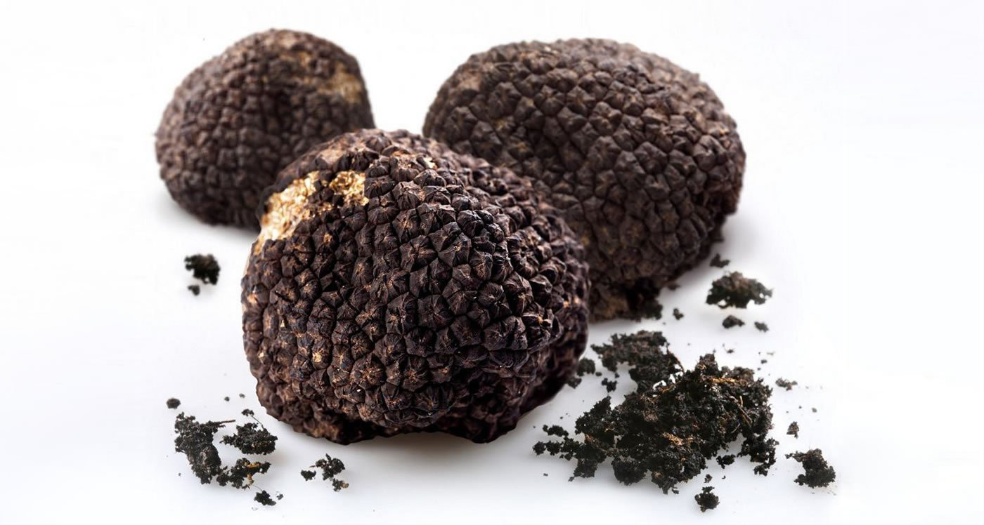 Top 10 Things You Did Not Know About Truffles