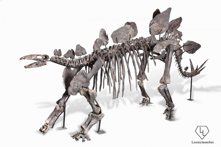 150-million-year-old-Stegosaurus-skeleton-Auction (1)