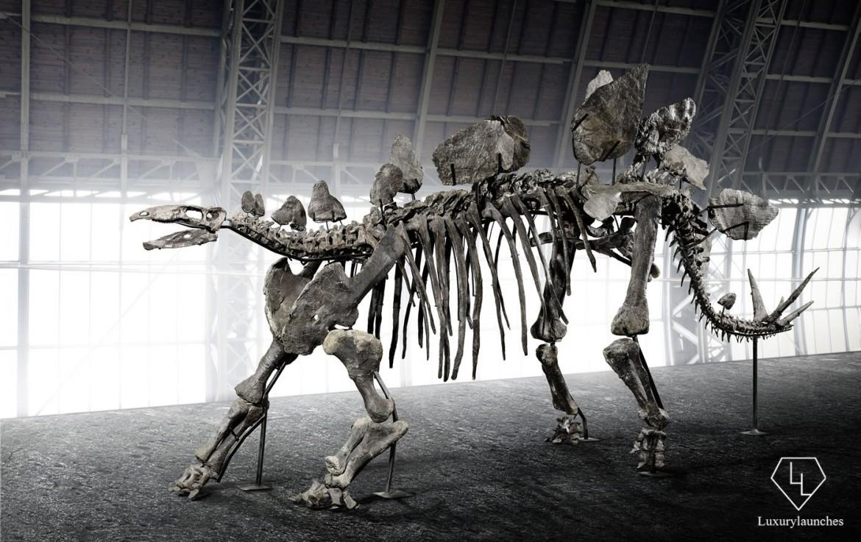 150-million-year-old-Stegosaurus-skeleton-Auction (2)