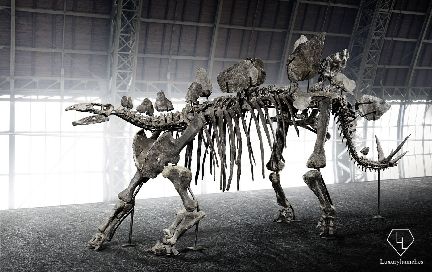 Hammer Down Auctions >> 150 million year old full sized Stegosaurus skeleton is up for grabs