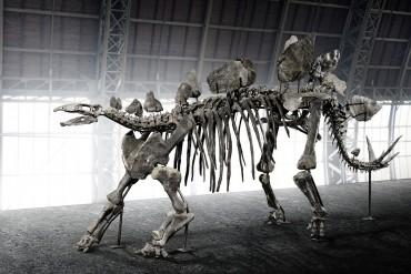 Auctionata_Stegosaurus_key visual