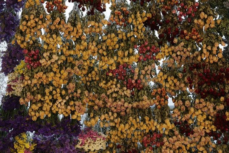 rebecca-louise-law-flower-canopy-eastland-melbourne (1)