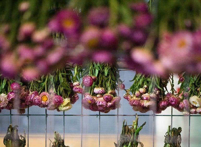 rebecca-louise-law-flower-canopy-eastland-melbourne (2)