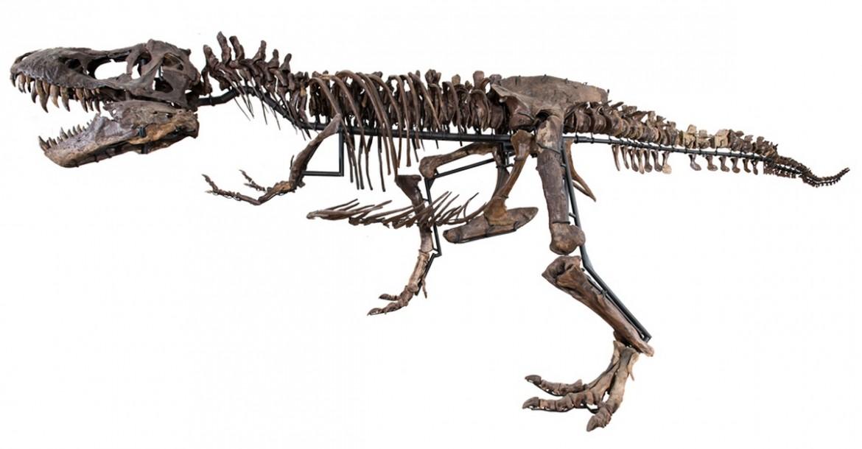 tyrannosaurus-rex-skeleton (1)