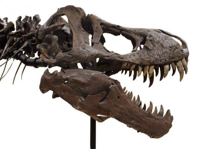 tyrannosaurus-rex-skeleton (2)