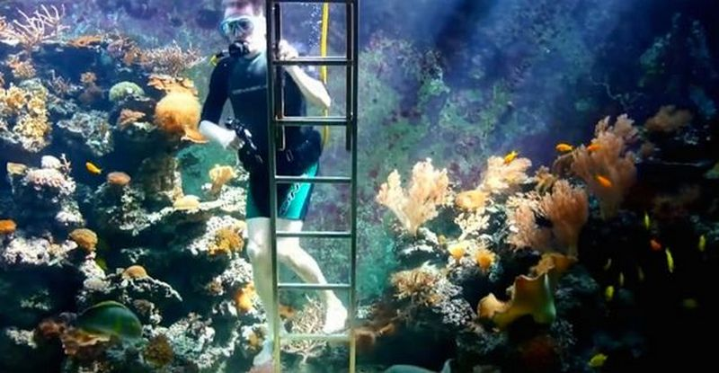 Man Makes A Massive 30 000 Liter Aquarium In His Living