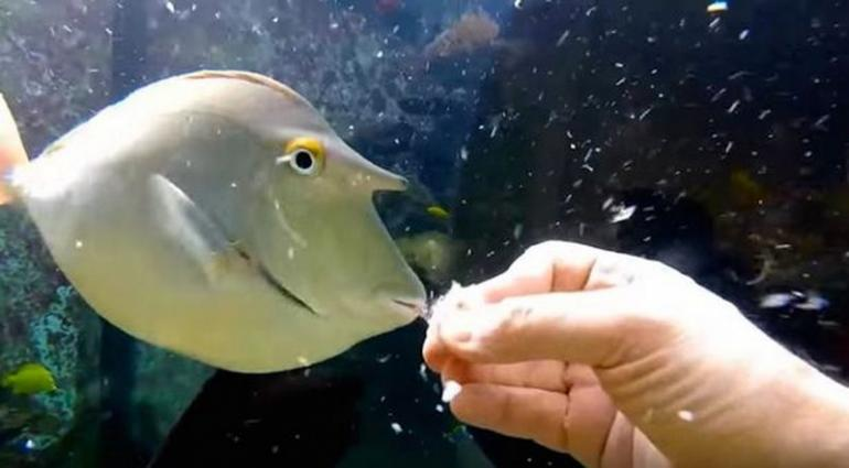 Man Makes A Massive 30 000 Liter Aquarium In His Living