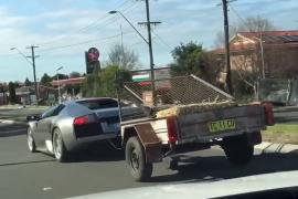 Lamborghini-towing-goats