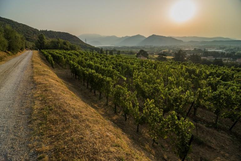 MOMLN-Franciacorta_wineyards