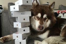 iphone-7s-for-dog