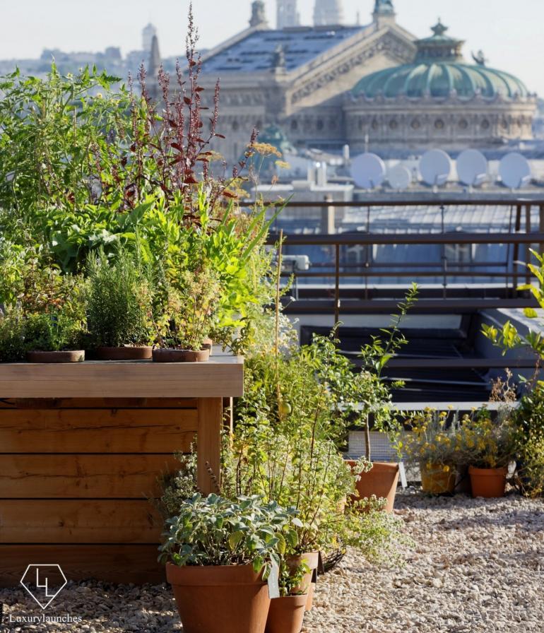mopar_-_vegetable_garden_3-1