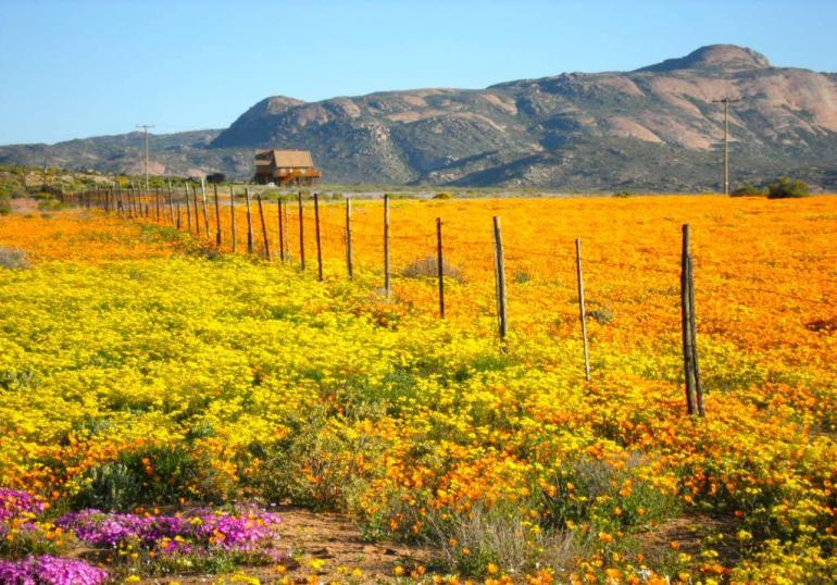 namaqualand-south-africa