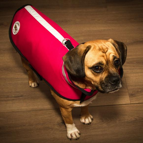 armoured tailored service for your dog (4)