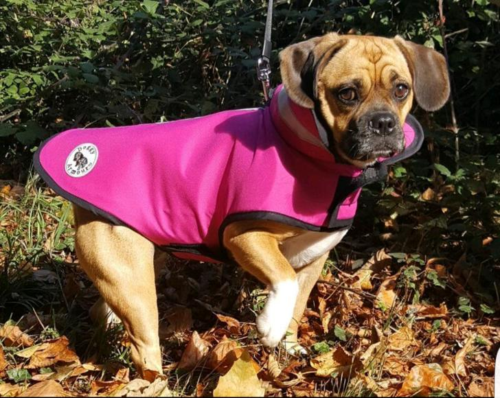armoured tailored service for your dog (5)
