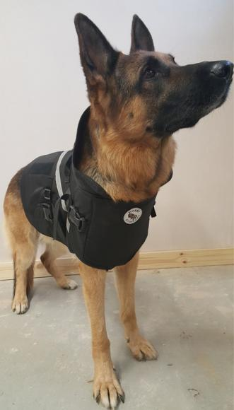 armoured tailored service for your dog (7)