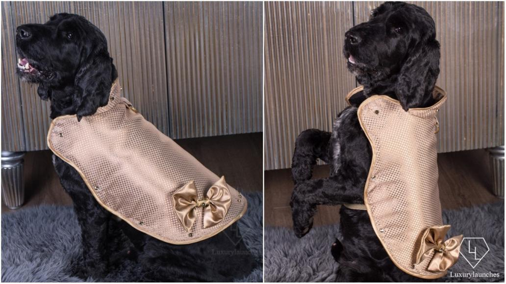 most expensive dog jacket