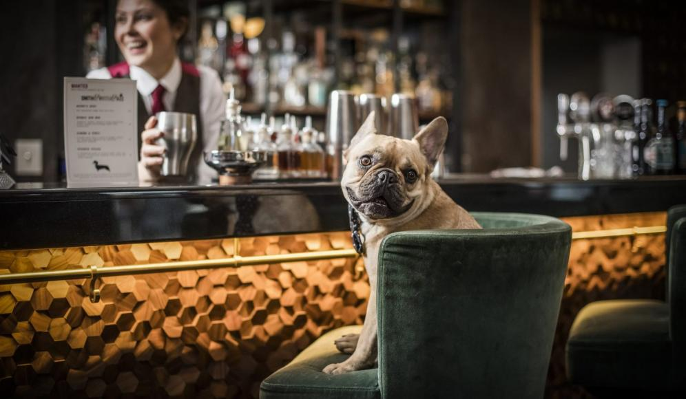 DOG-COCKTAILS (3)