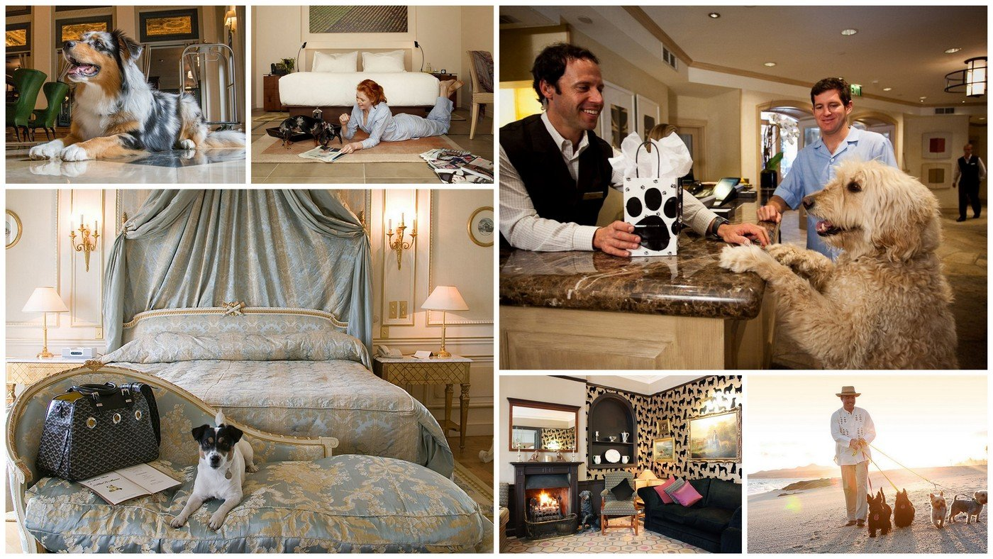 9 of the pet friendly luxury hotels in the world 2018