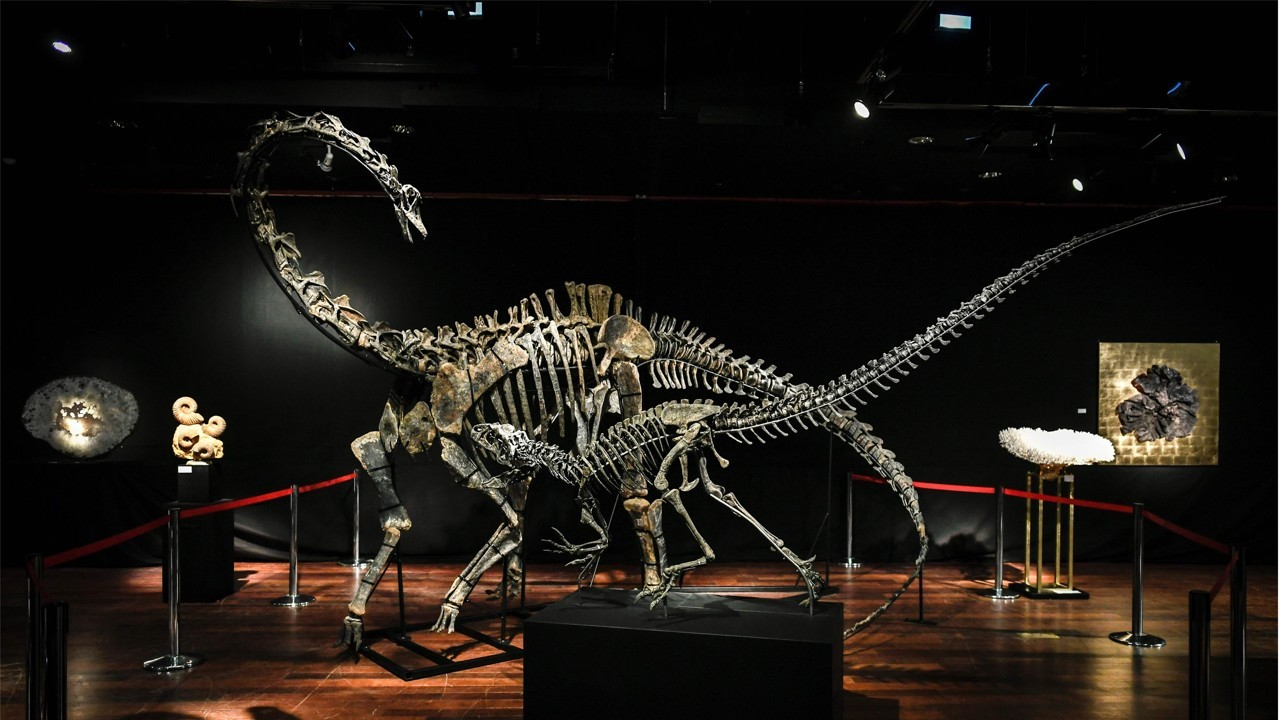 Skeletons Of Two Dinosaurs on Old Concept Cars