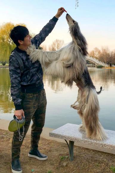 stylish-dog (2)