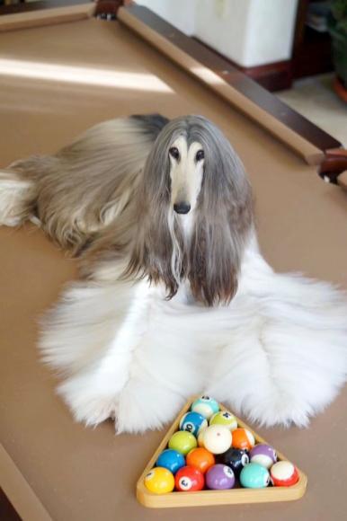 stylish-dog (3)