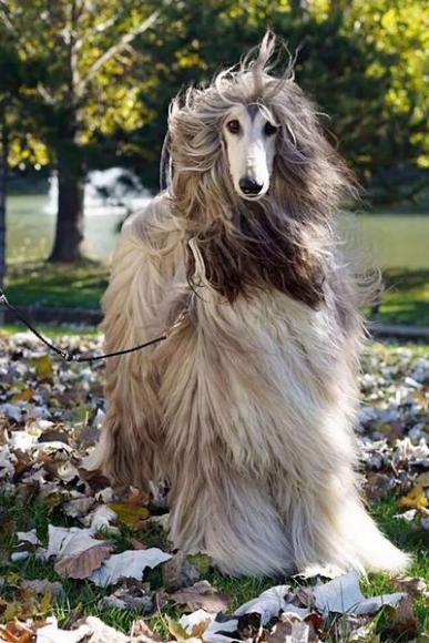 stylish-dog (4)
